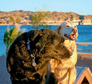 Dog Parks | Two Pet Friendly Dog Runs | Emerald Cove Resort